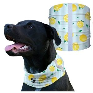 Lemon Zest dog Shield Bandana Scarf